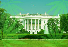 First Marijuana Growers in D.C. Clear Regulatory Hurdles
