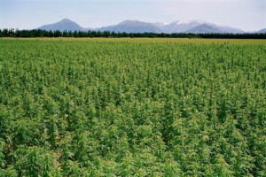 Hemp is the Most Beneficial Plant Known to Mankind