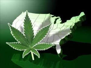 Marijuana-MGN---24608678