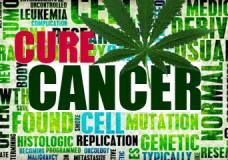 Federal Government Admits Marijuana Effective in Treatment of Cancer
