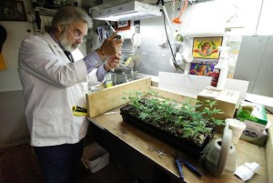 Arizona Bill Would Allow Medical Marijuana Research at Universities