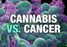 Proof Cannabis Can Cure Cancer