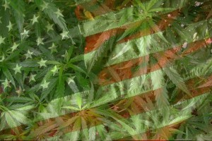 Which States are Next to Legalize Marijuana? - Weed Finder™ News
