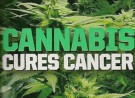Federal Govt Agency Admits: Cannabis Oil Kills Cancer