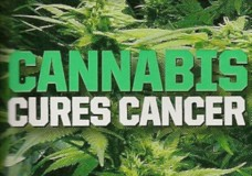 Federal Govt Agency Admits: Cannabis Oil Kills Cancer