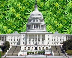 Congress Passes Pro-Pot Amendments, Predicts End to War on Marijuana - Weed Finder™ News