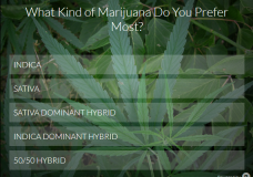 What Kind of Cannabis Do You Prefer Most?  [VOTE HERE]