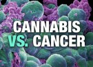 National Cancer Institute Confirms Cannabis Kills Cancer