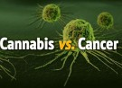 National Cancer Institute Proves Cannabinoids Cause Cell Death in Tumors