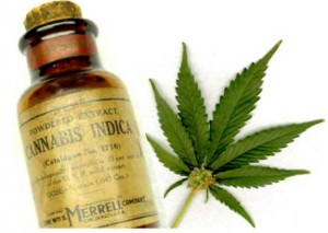 New Jersey School Denies Cannabis Oil Treatments for Child's Epilepsy - Weed Finder™ News