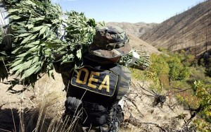 Is the DEA Preparing to Reclassify Cannabis this Summer? Weed Finder™