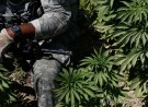 House Approves Amendment Allowing VA Doctors to Recommend Cannabis to Veterans