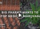 Big Pharma is Paying to Block Marijuana Legalization