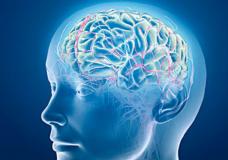 Consuming Marijuana Everyday Can Repair and Defend the Brain